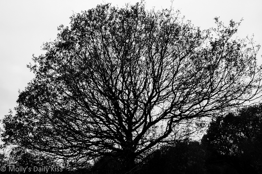 Bare bones of winter tree