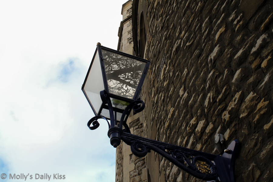 Tree reflected in glass lantern at the Tower of London
