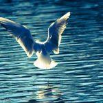 Seagull taking flight into the sunshine