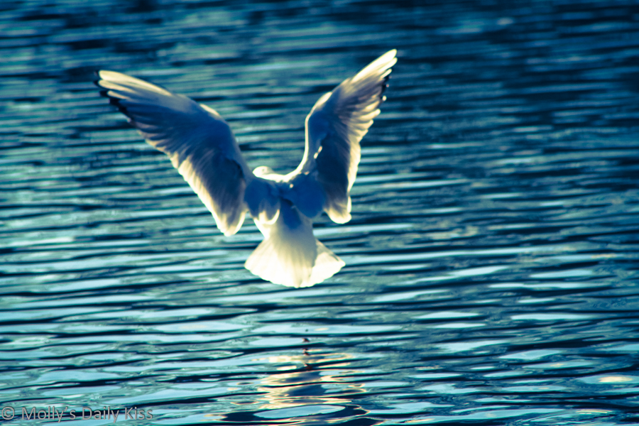 Seagull taking flight into the sunshine