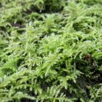 Close up shot of moss in the woods