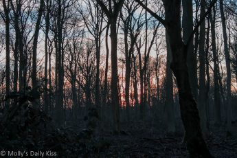 Red sunset through woodland