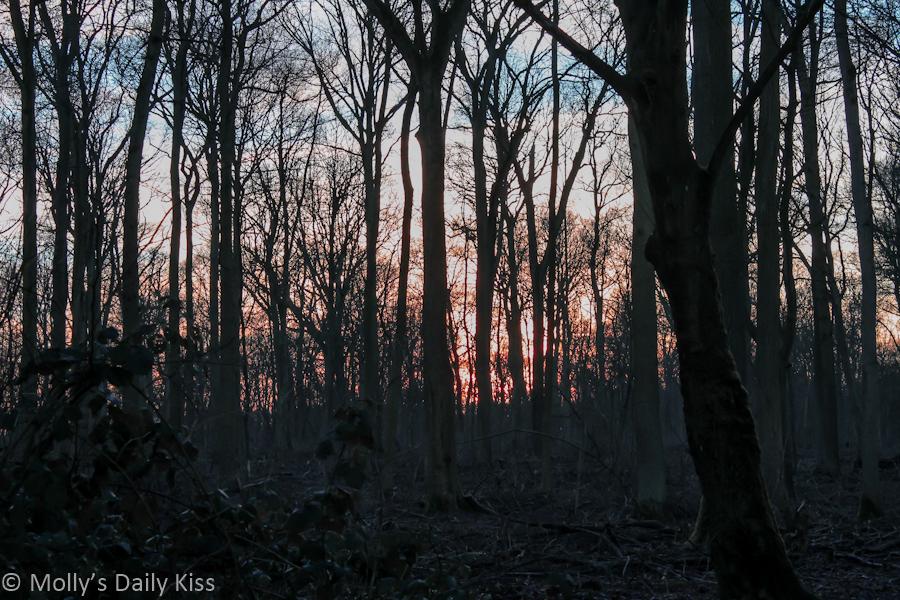 Red sunset through woodland
