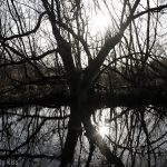 Winter spider tree reflection