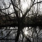 Winter spider tree reflection