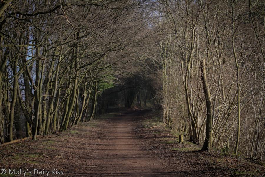 Winter path through woods