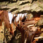 Tree trunk split open
