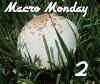 macro Monday badge