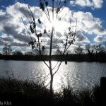 Morning sun at Stanborough Lakes