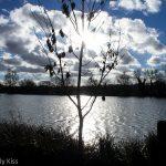Morning sun at Stanborough Lakes