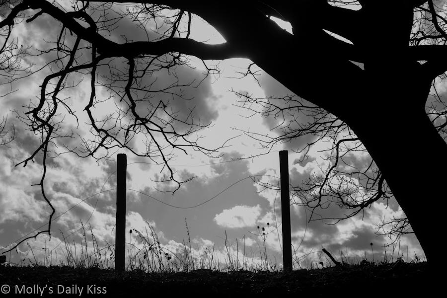 Black and white of tree silouhette