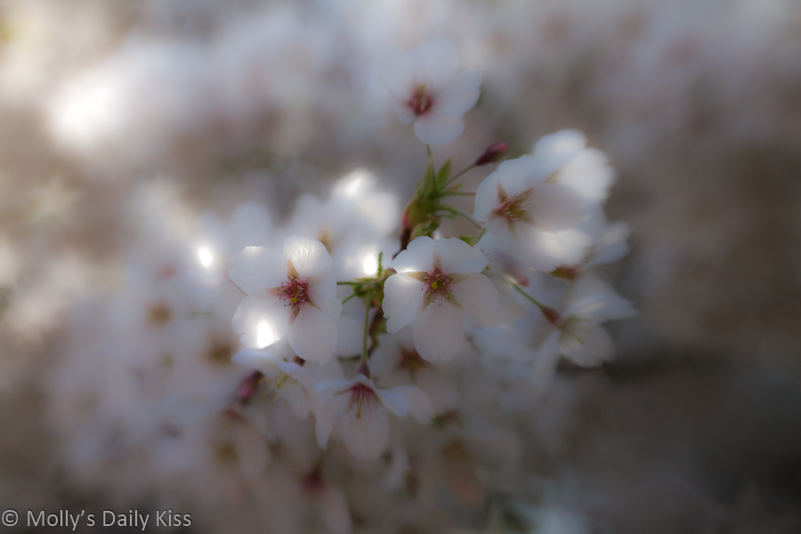 Close up of spring blossom