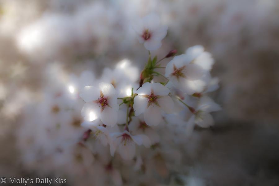 Close up of spring blossom