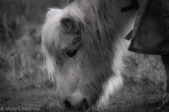 White pony in black and white