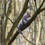 Cute Squirrel in tree