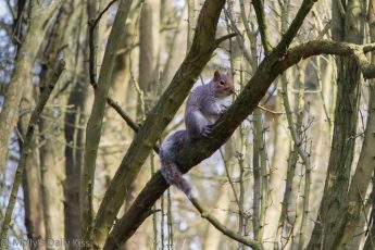 Cute Squirrel in tree