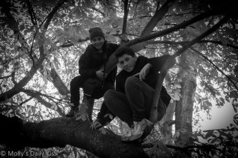 Children climbing a tree in black and white