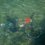 Bike underwater in river