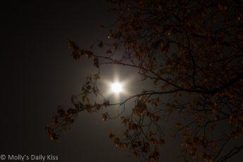 Moonlight through trees