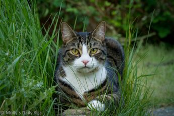 Tabby and white cat sitting in long grass