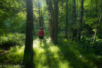 woman walking in the woods in the eveing sunlight