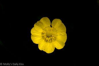 Macro shot of buttercup
