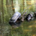 Old tyre dumped in river