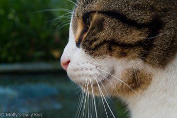 Close of a cat face in profile