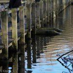 reflection of pier walk in water