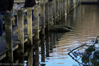 reflection of pier walk in water