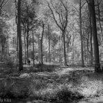 Infrared woodland
