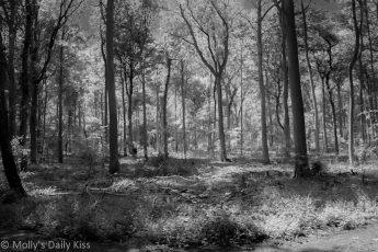Infrared woodland