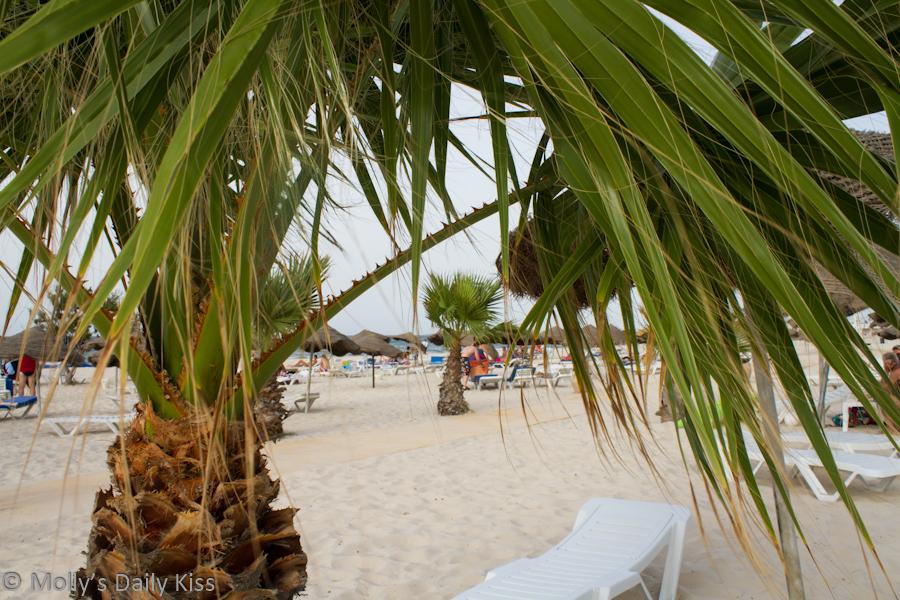 palm trees on the beach Sahara Beach Tunisia