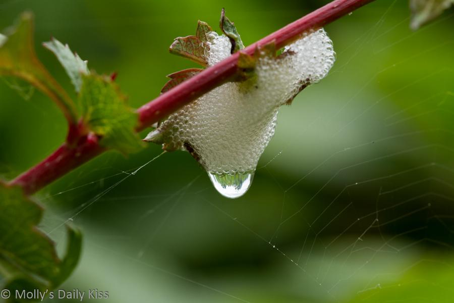 Bubbles on a plant