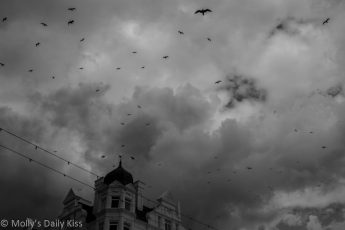 Swarm of birds in stormy sky