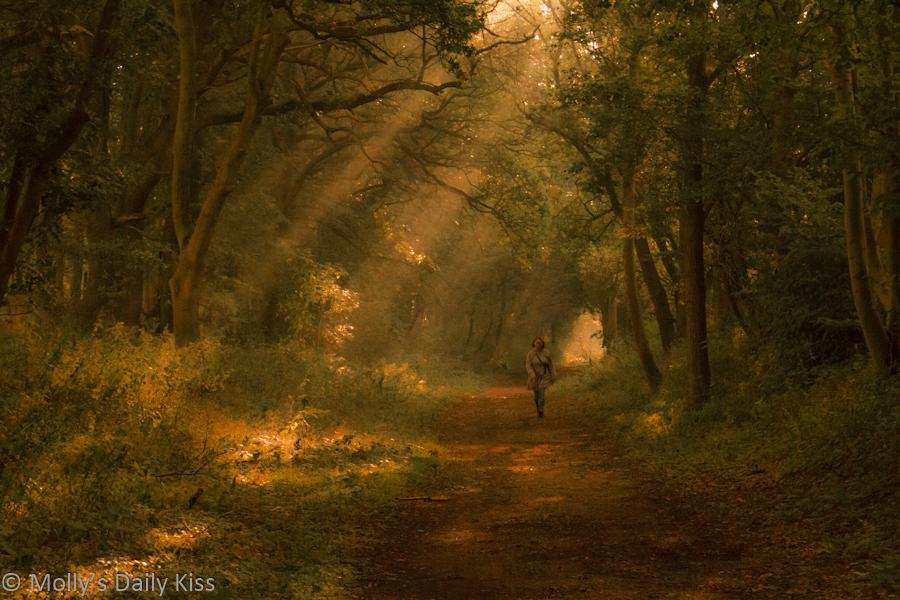 Shafts of light through trees