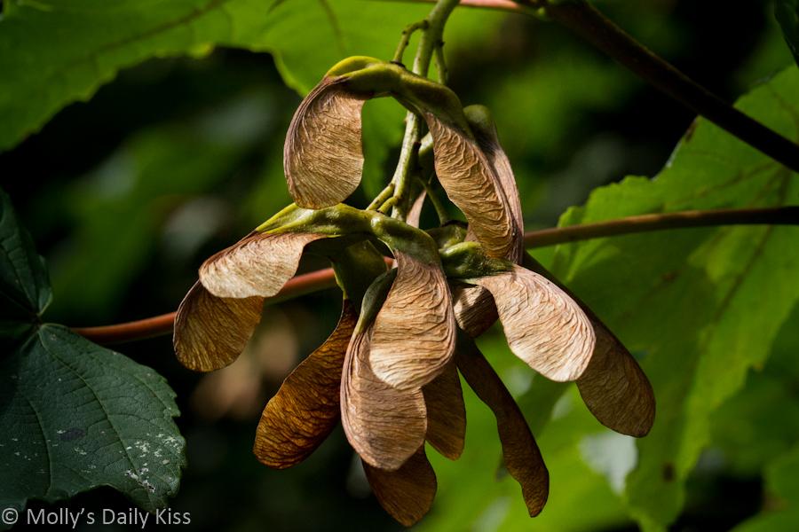 Seeds on a tree