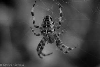 Black and white macro shot of spider in its web
