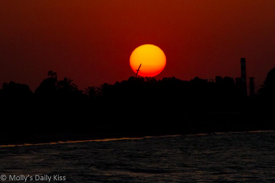 Bird fling in front of golden setting sun Tunisia