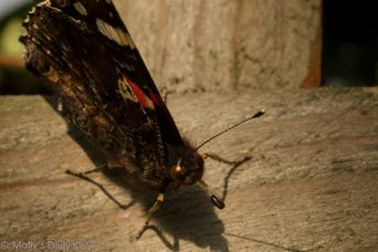macro shot of Butterfly mouth