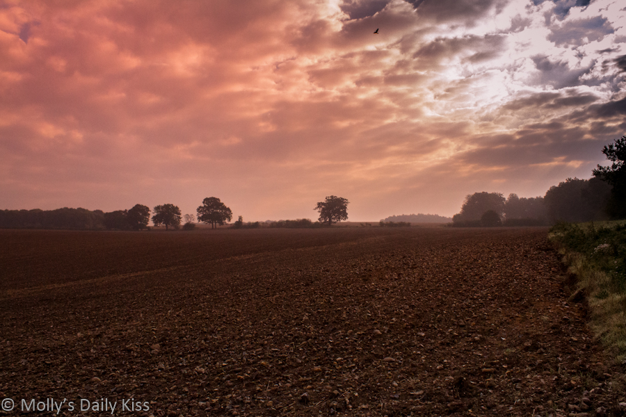 autumn skies and ploughed field