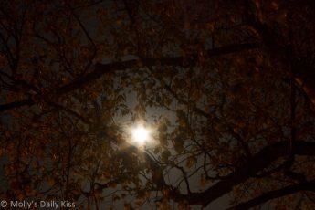 Moonshine through trees