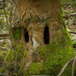 Eyes in a tree trunk