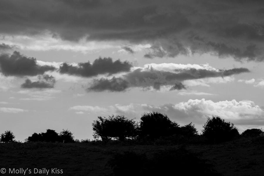 Crocodile cloud in the sky