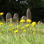Graves covered in wild summer flowers