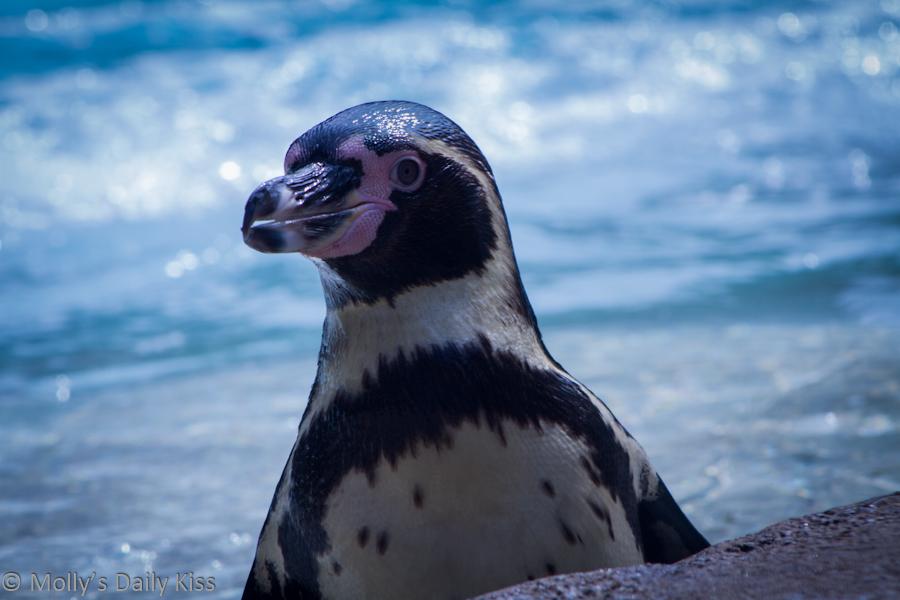 penguin at London Zoo