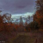 Winter path through trees