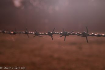 Morning sunlight through mist onto barb wire