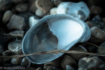 Macro shot of sea shell