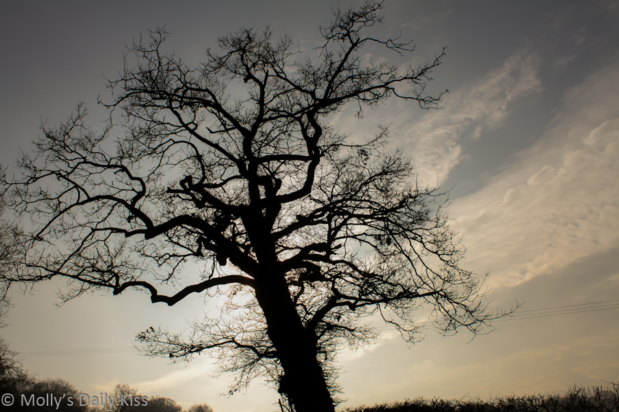 Silhouette of tree against winter sky